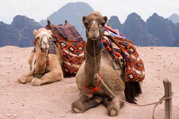 Glamping in the Desert - 5 Cool Tent Camps - Camels