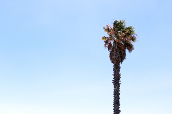 Palm Tree by Frankie Thompson