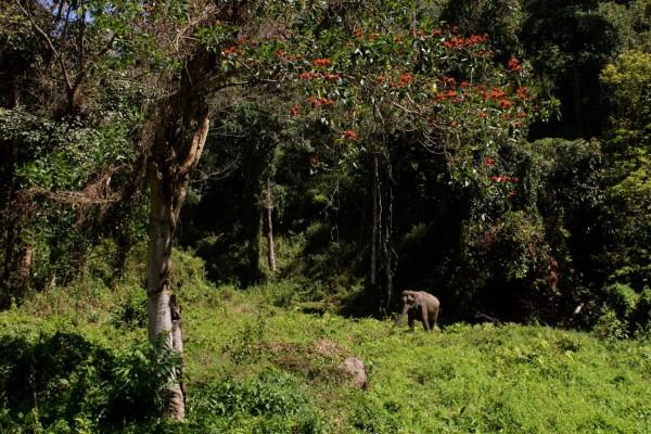 chiang mai_hill tribes_trekking_travelettes_annika ziehen_thailand - 05