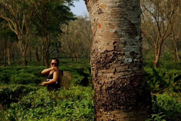 chiang mai_hill tribes_trekking_travelettes_annika ziehen_thailand - 15