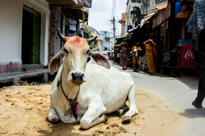Reasons to put Pushkar on your India bucket list - Kathi Kamleitner - Travelettes 840 (17 of 24)