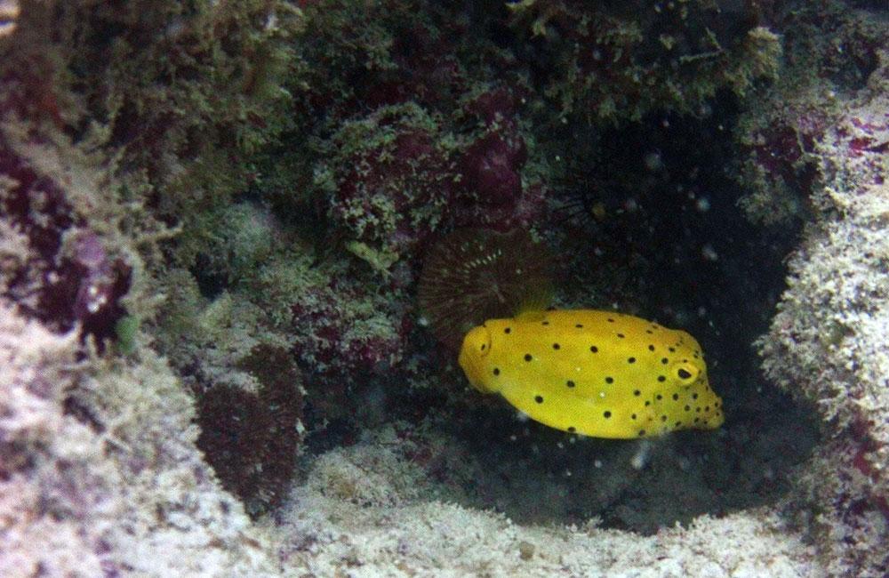 scubadiving-scubapro-travelettes20150806_0160
