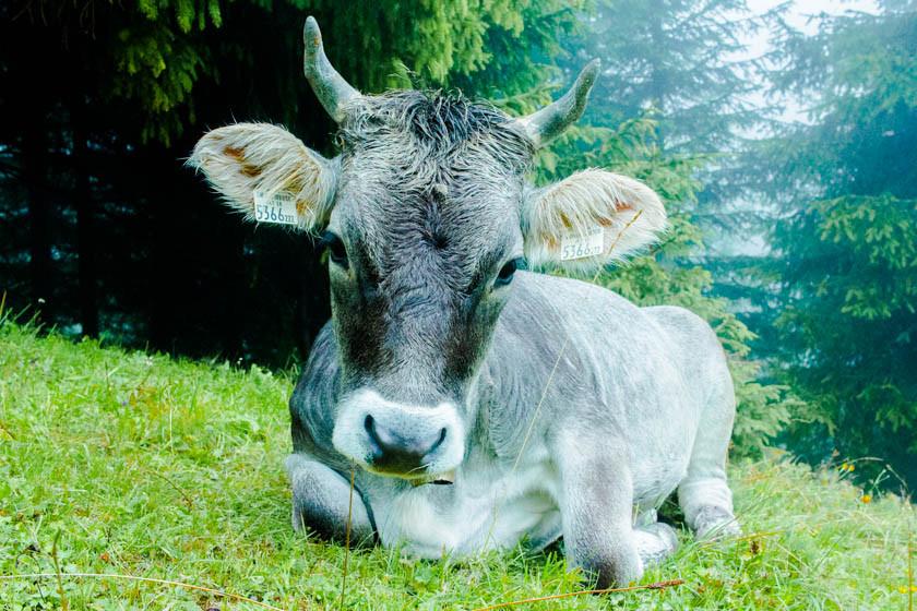 10 reasons to love innsbruck austria kathi kamleitner travelettes (20 of 28)