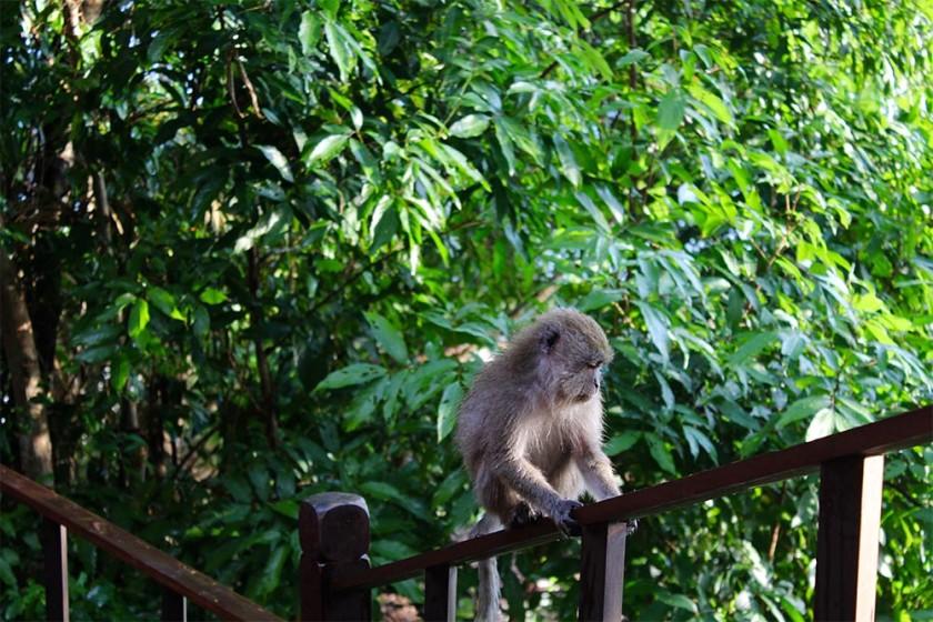 borneo-wildlife-intrepid-travelettes20150716_0292