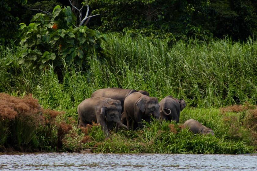 borneo-wildlife-intrepid-travelettes20150723_0300