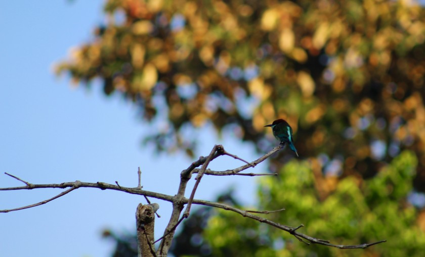borneo-wildlife-intrepid-travelettes20150724_0305