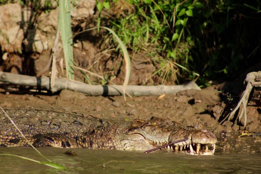 borneo-wildlife-intrepid-travelettes20150724_0306