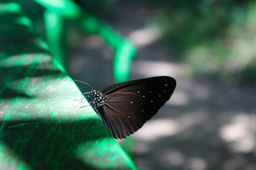 borneo-wildlife-intrepid-travelettes20150724_0309