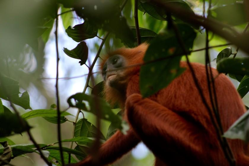 borneo-wildlife-intrepid-travelettes20150725_0310