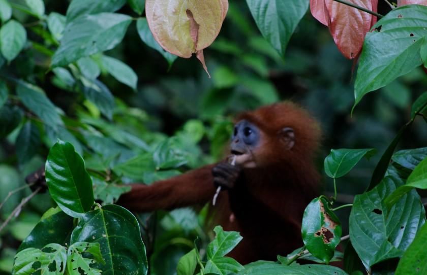 borneo-wildlife-intrepid-travelettes20150725_0311