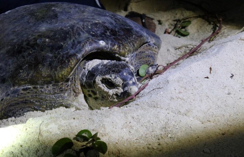borneo-wildlife-intrepid-travelettes20150726_0313