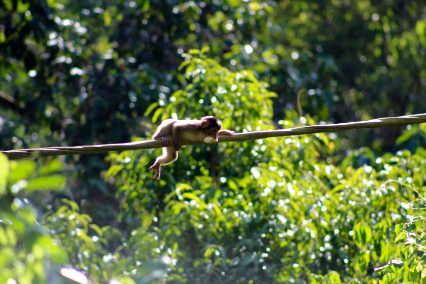 borneo-wildlife-intrepid-travelettes20150727_0289
