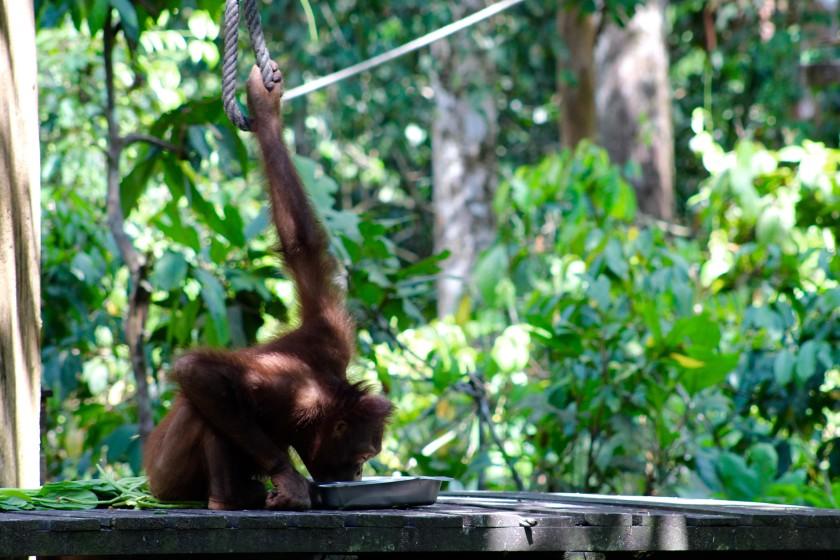 borneo-wildlife-intrepid-travelettes20150727_0316
