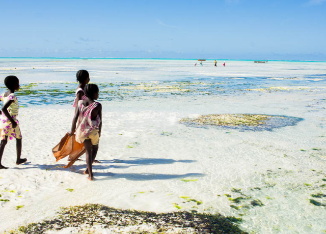 Experience Zanzibar like a Local with Red Monkey Lodge