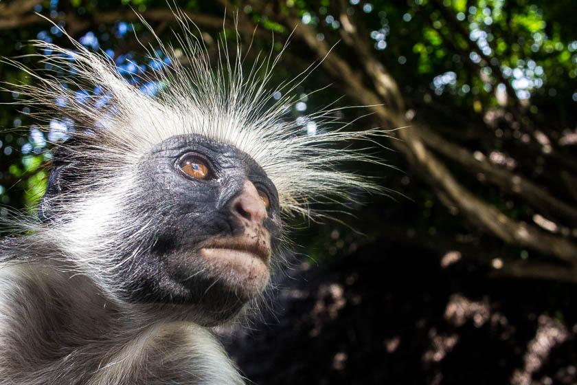 Zanzibar, Like a Local, Kathi Kamleitner, Travelettes -54