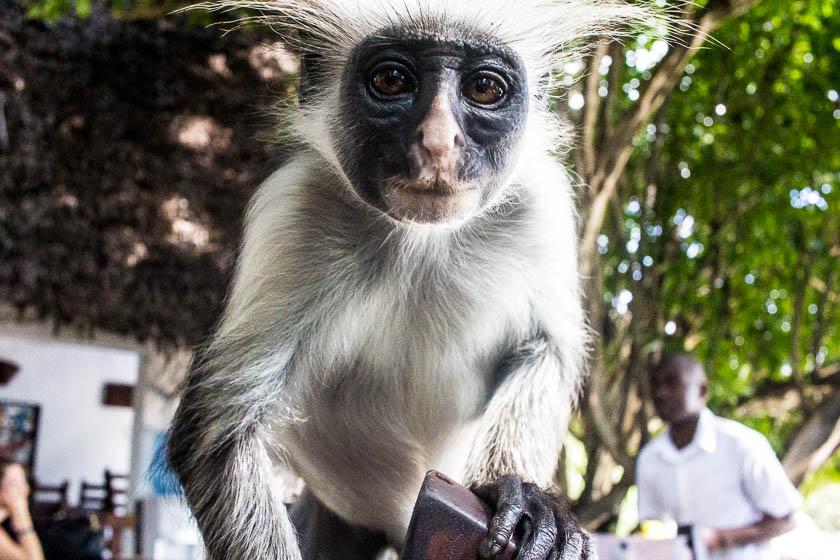 Zanzibar, Like a Local, Kathi Kamleitner, Travelettes -56