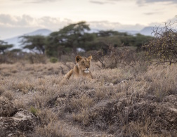 A South African Safari: Can you get TOO close to nature?