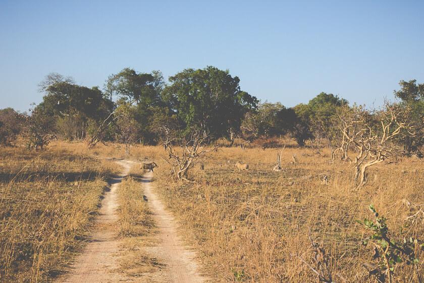 Budget Safari - Kafue National Park - Kathi Kamleitner - Warthog