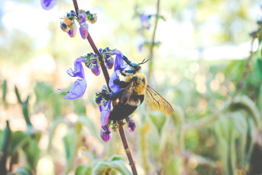 Budget Safari - Kafue National Park - Kathi Kamleitner - Big Bee