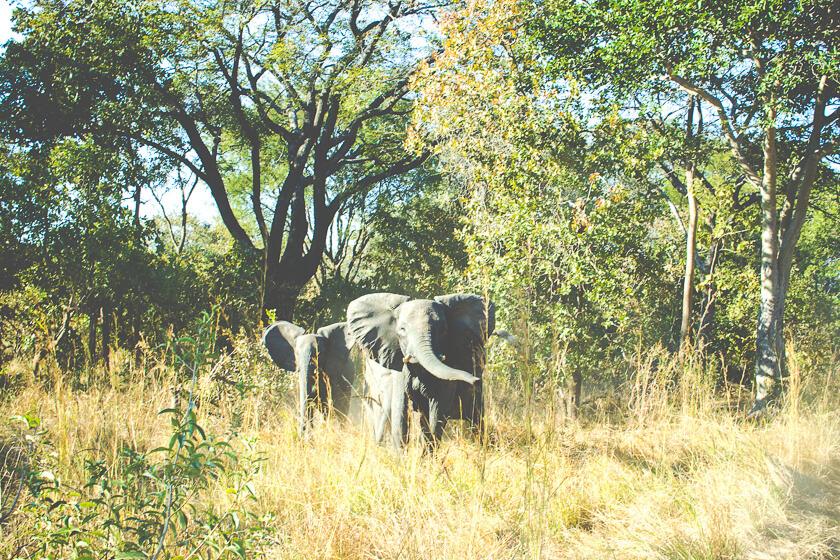 Budget Safari - Kafue National Park - Kathi Kamleitner - Elephants