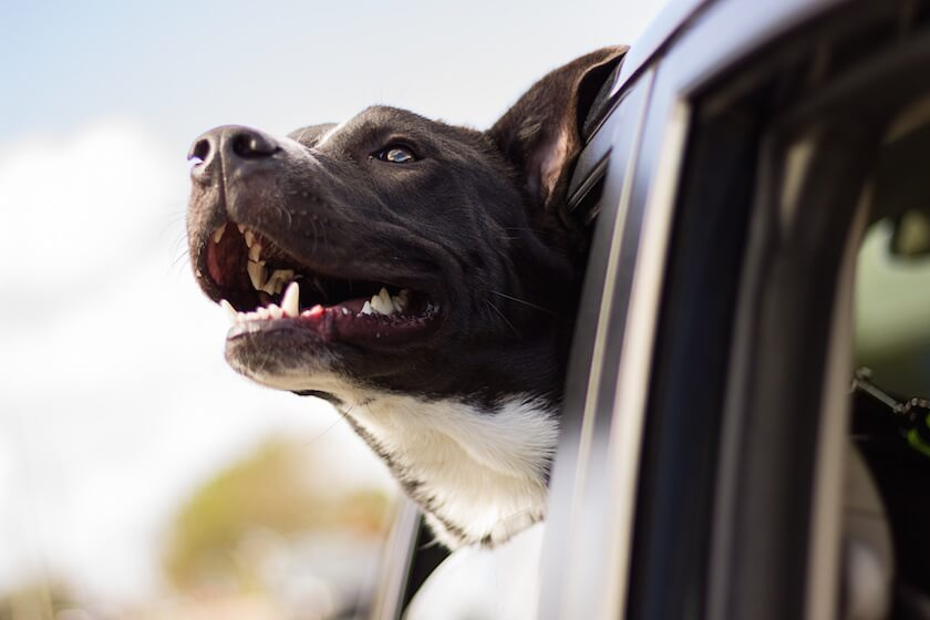 travel with your dog 2