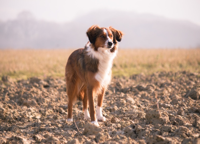 The Truth about Travelling with Your Dog