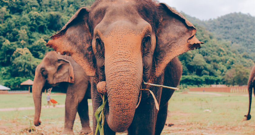 Travelettes Chiang Mai_Elephants