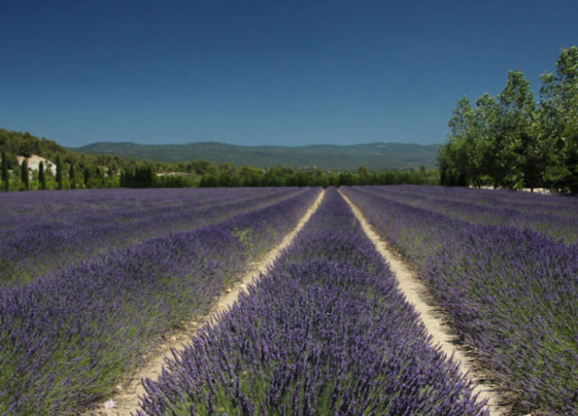 7 Ways to Enjoy Life in Provence, France