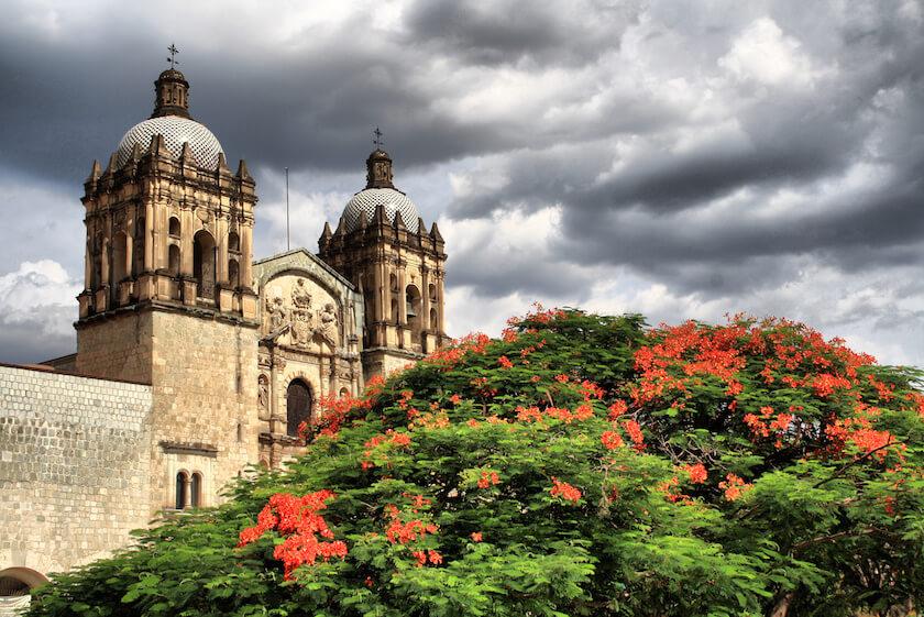 Florecer_en_Oaxaca