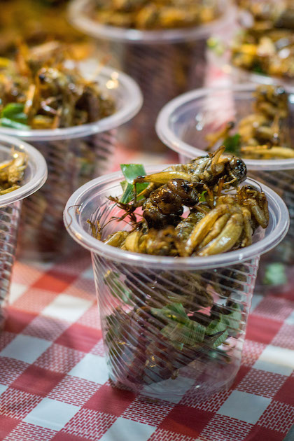 Grasshoppers Insects Food Eating Future Critters