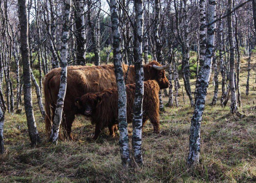 visit-scotland_-travelettes_annika-ziehen20161128_0045