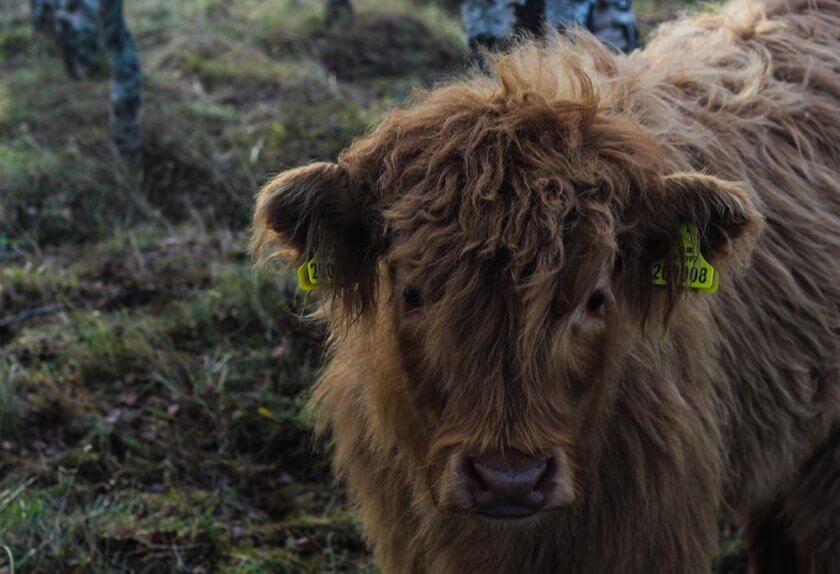 visit-scotland_-travelettes_annika-ziehen20161128_0046
