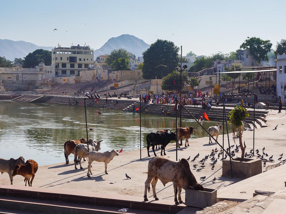 Pushkar - camel fair and a holy lake