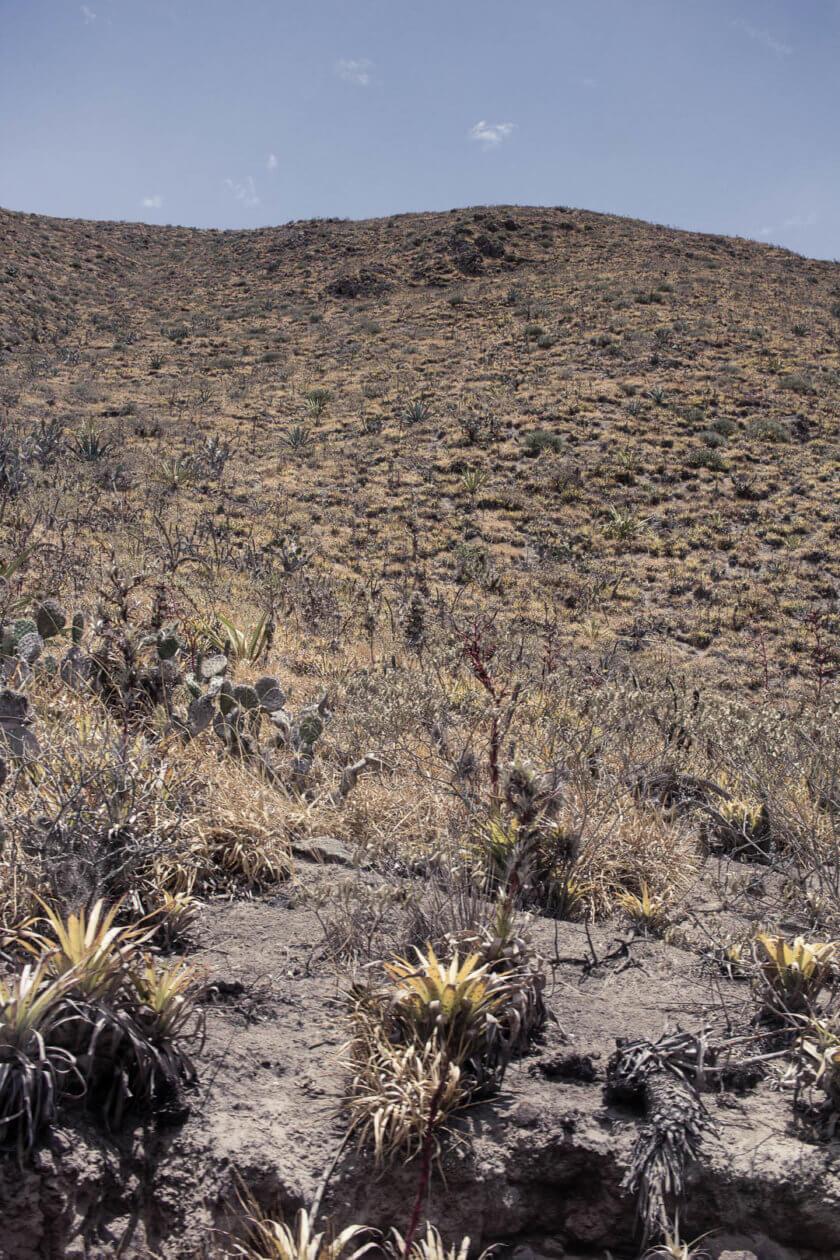 The sparse vegetation of the Andean mountains along Tren de la Libertad in Ecuador.