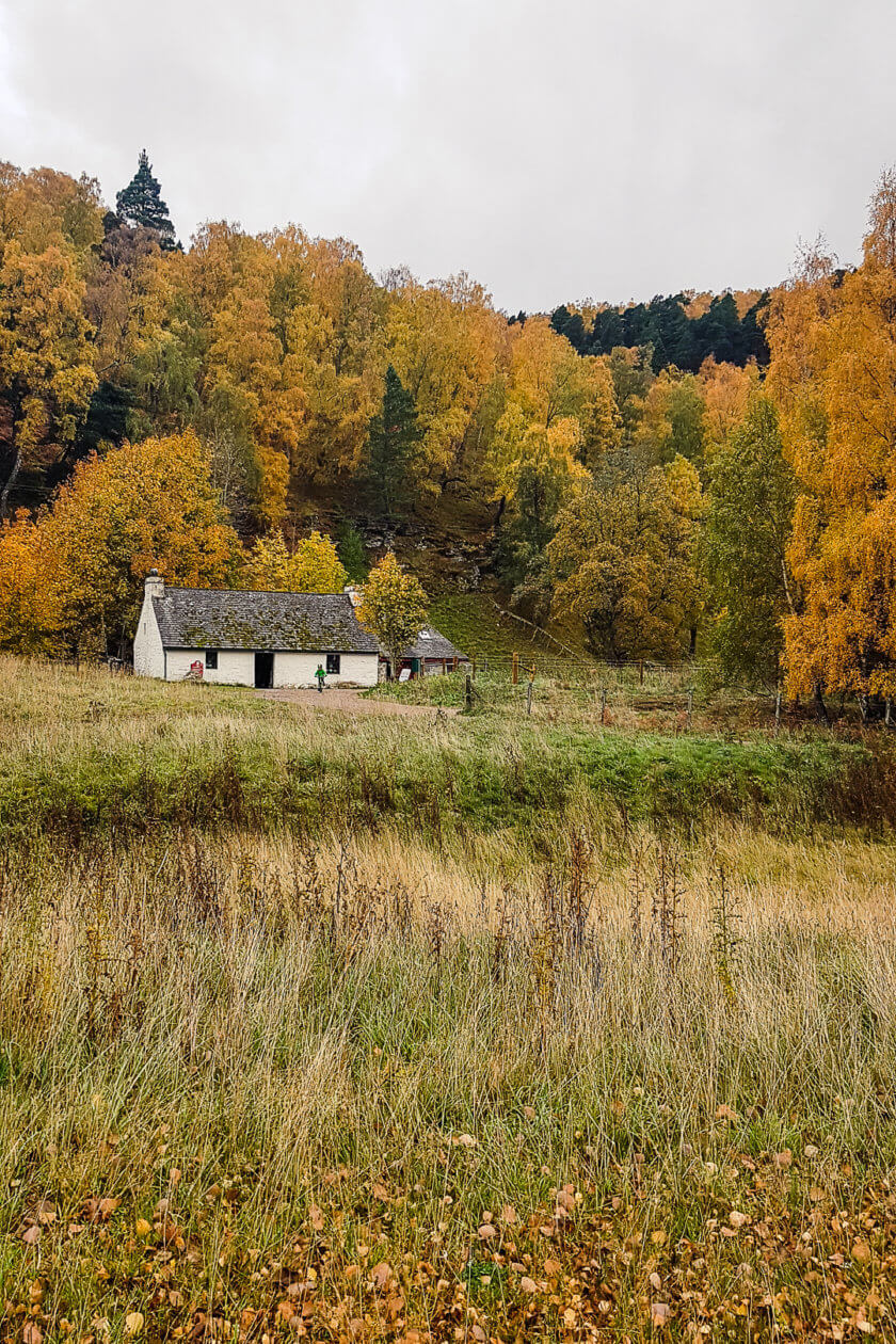 A house in the woodlands of the Cairngorms National Park