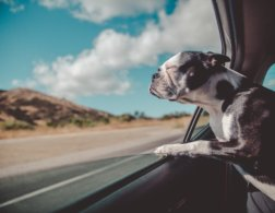 10 Adventurous Pets of Instagram You Need in Your Life