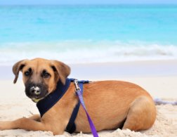 Paradise and puppies on the Turks and Caicos Islands