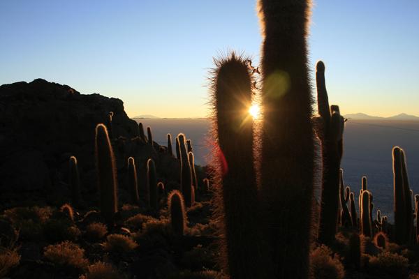 cactus island Bolivia