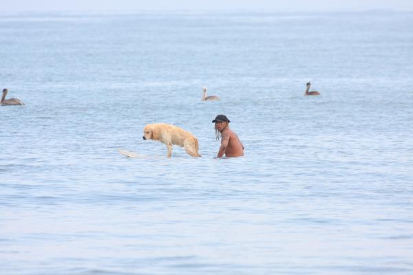 surf dog mancora