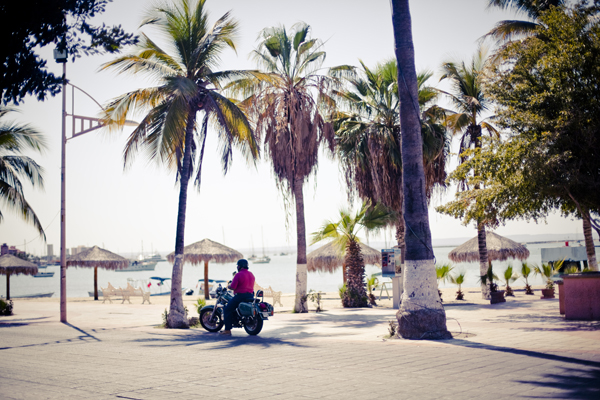La Paz, Mexico - Palm Trees, Ice Cream and Dolphins