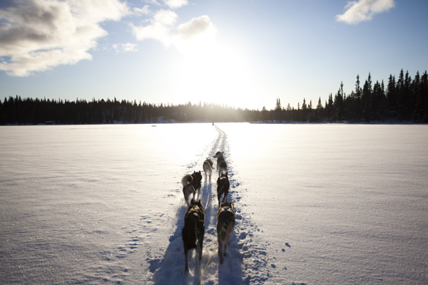 Dogsledding in Hemsedal, Norway