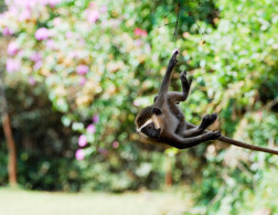 Monkey business on the Kenyan coast