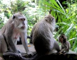 The Sacred Monkey Forest in Ubud, Bali