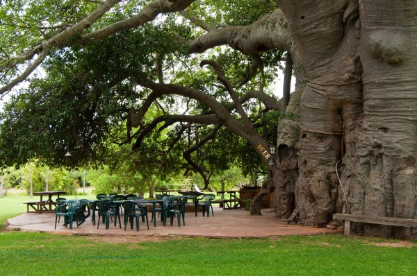 big baobab bar in south africa