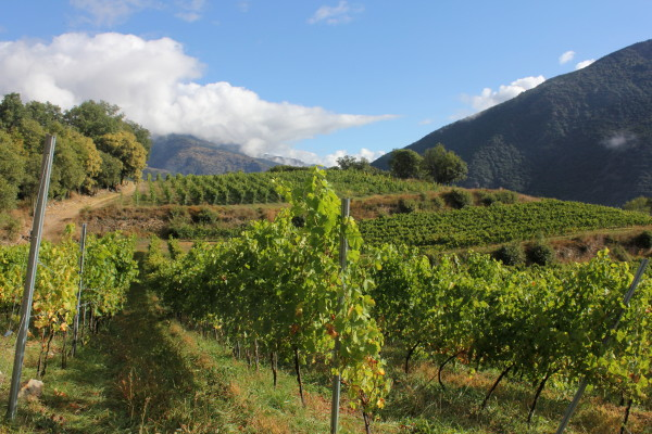 Wine in the Pyrenees