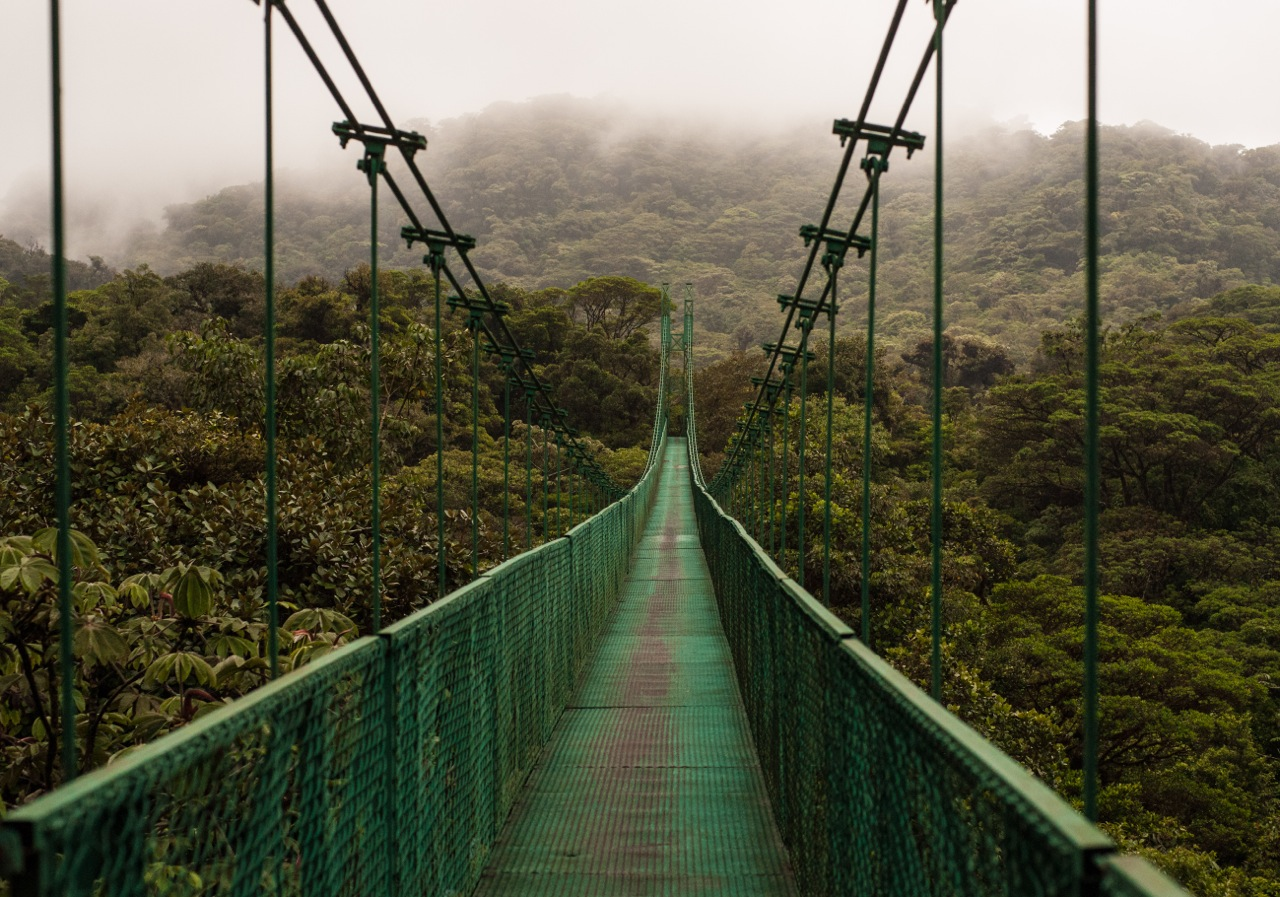 Monteverde Cloudforest