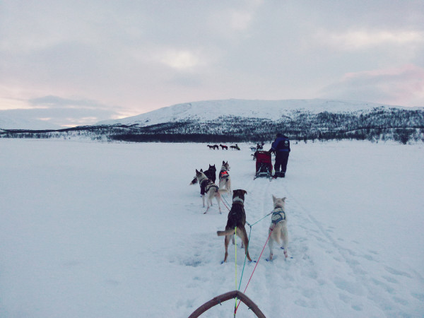 Husky Sledding Norway