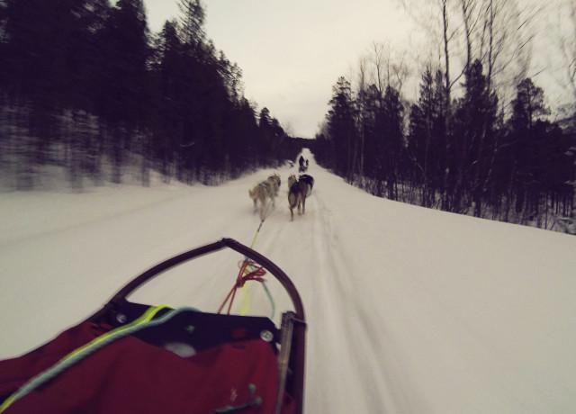 World's Coolest Internship: Husky Dog Handler
