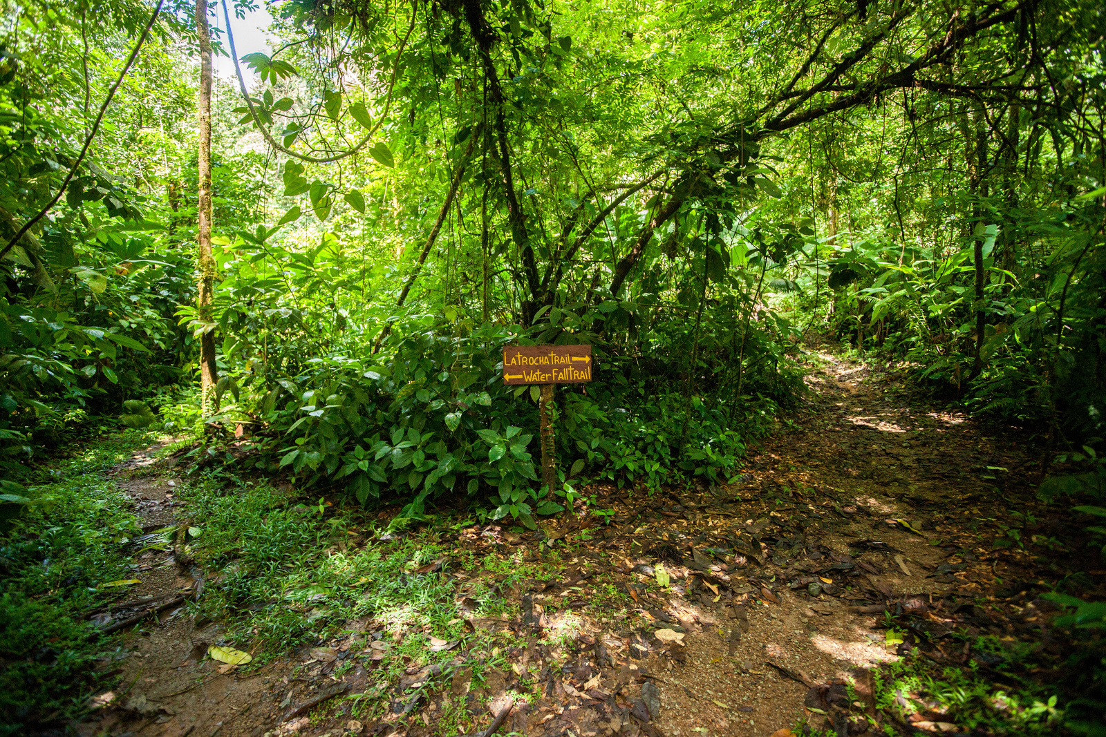 osa peninsula - rainforest of the austrians
