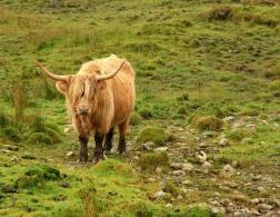 Scotland for Beginners: A Culture Guide